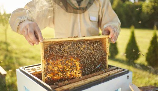 蜂の子サプリ市販を3つ集めたよ♪どんな効果があるの?